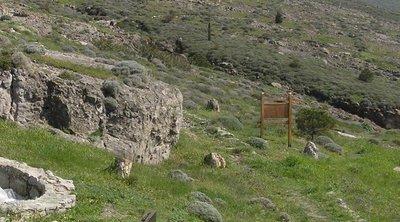 Σύλληψη Τσέχων επιβατών στο Αεροδρόμιο Μυτιλήνης – Μετέφεραν κομμάτια από το Απολιθωμένο Δάσος της Λέσβου