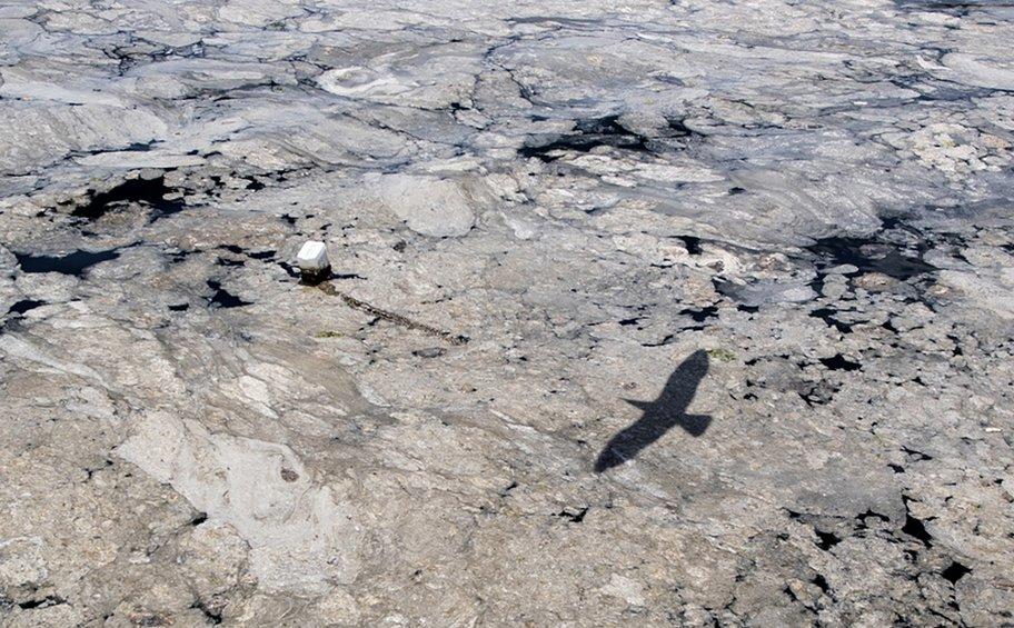 Συσκέψεις στο ΥΠΕΝ για το φαινόμενο της βλέννας στα παράλια της Λήμνου